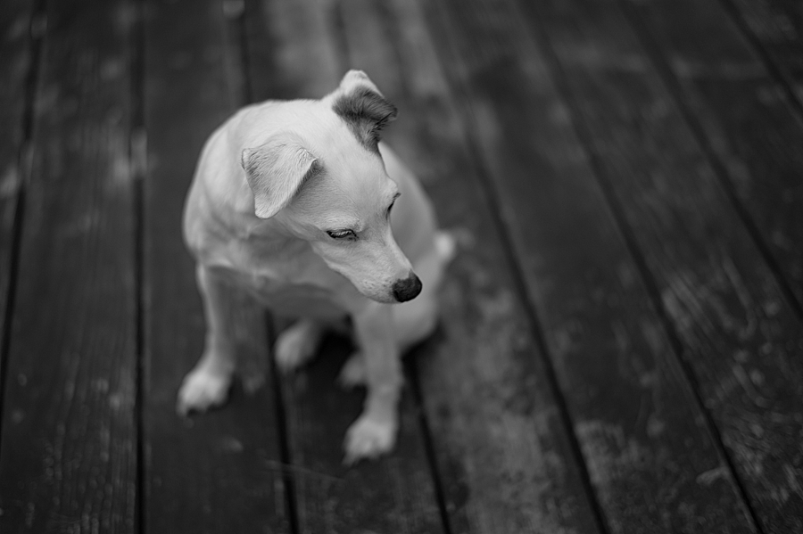 Dog | SUMMILUX-M 1:1.4/50 ASPH <br> Click image for more details, Click <b>X</b> on top right of image to close