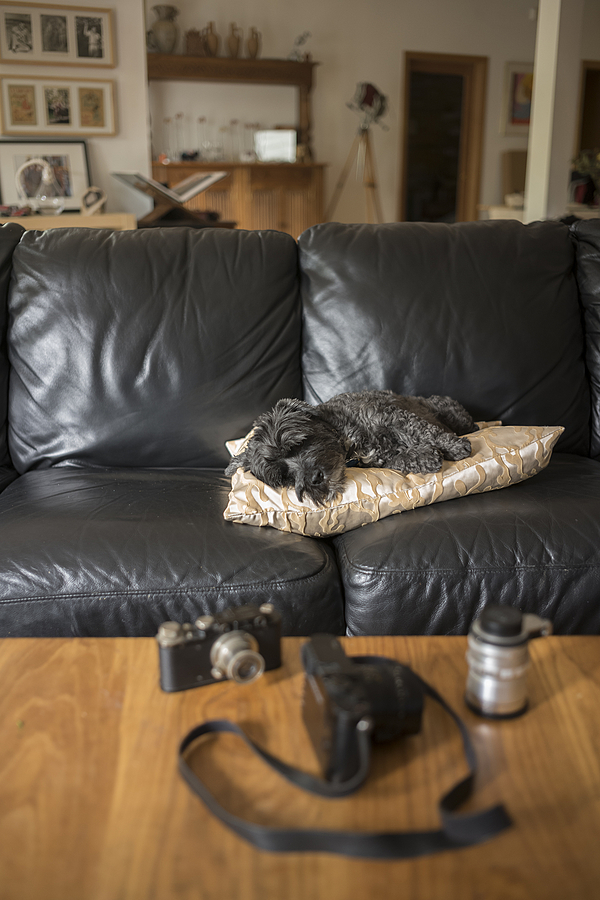 Molly on couch | LEICA SUMMICRON 35MM F2 ASPH <br> Click image for more details, Click <b>X</b> on top right of image to close