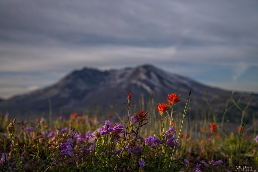 Mt St Helens 1 | LEICA SUMMICRON 35MM F2 ASPH <br> Click image for more details, Click <b>X</b> on top right of image to close
